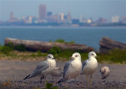 #EveryDayAPhoto: Celebrating the beauty of Western New York