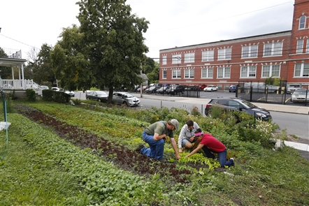 Explore urban farms like 5 Loaves, Groundwork Market