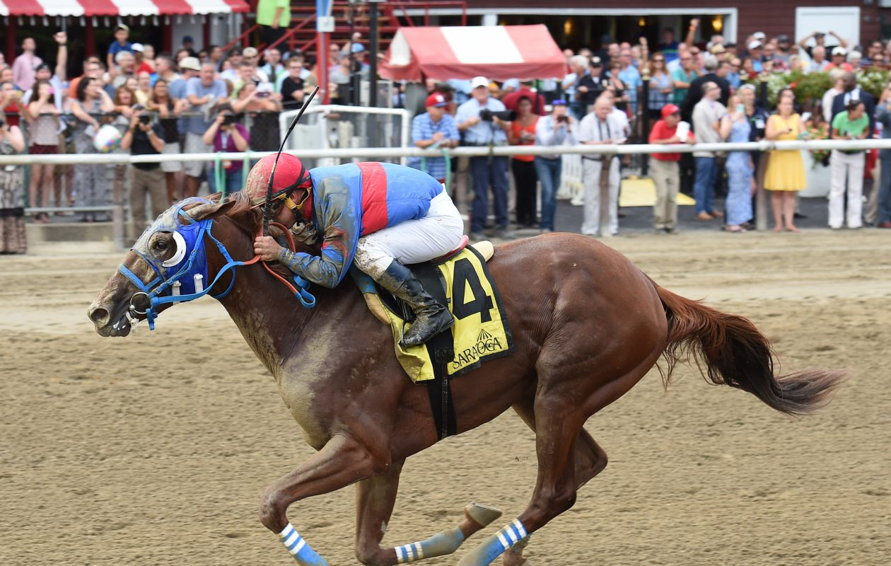 Gunnevera could surprise in the Breeders' Cup Classic. Photo Credit: Chelsea Durand/NYRA
