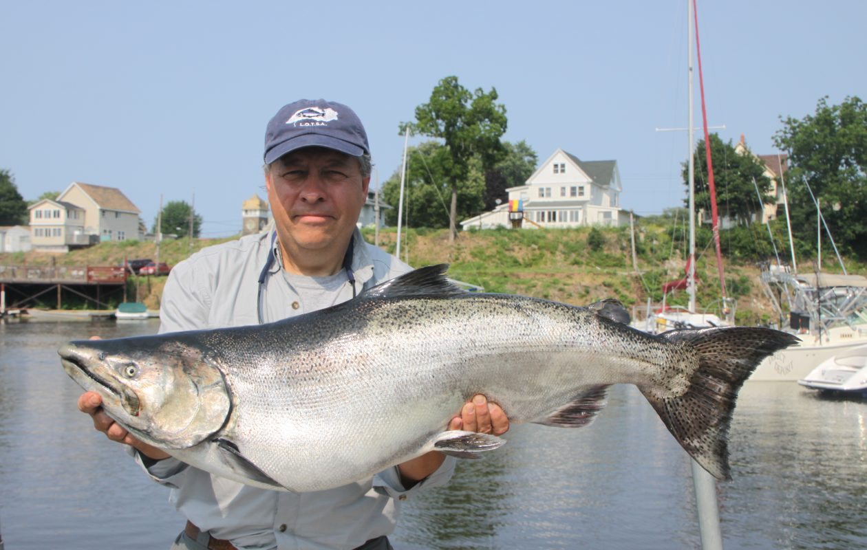 Large king salmon like this 32-pound Olcott fish was the winner of the Summer LOC Derby. Joe Yaeger of East Amherst holds the fish caught off his boat. These fish are alewife eating machines.