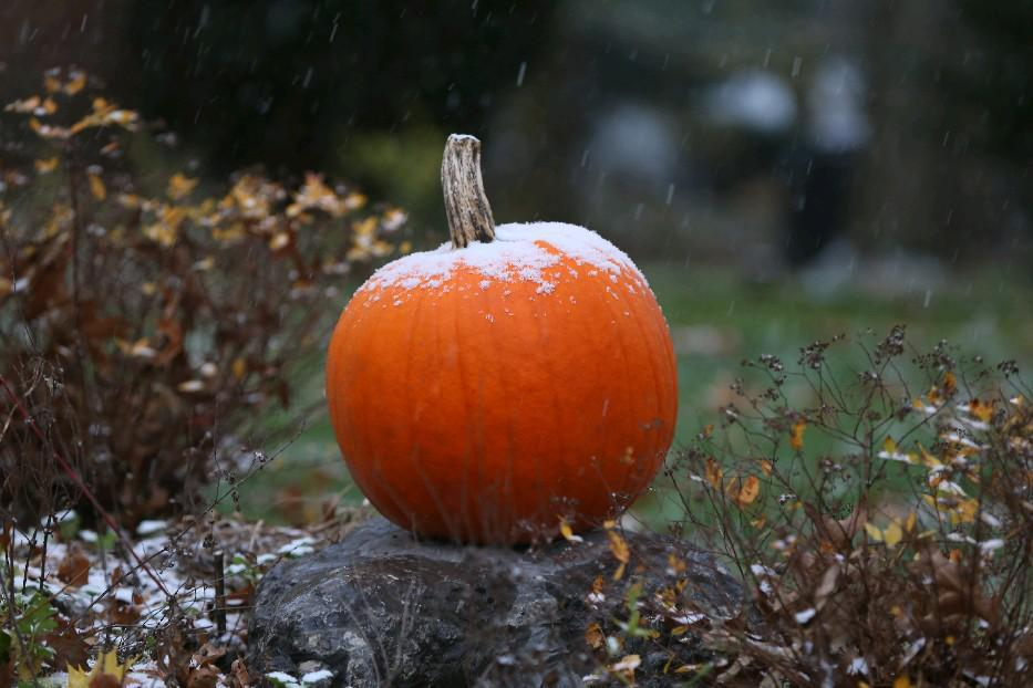 It's the great snowy pumpkin, Charlie Brown. (Mark Mulville/Buffalo News file photo)