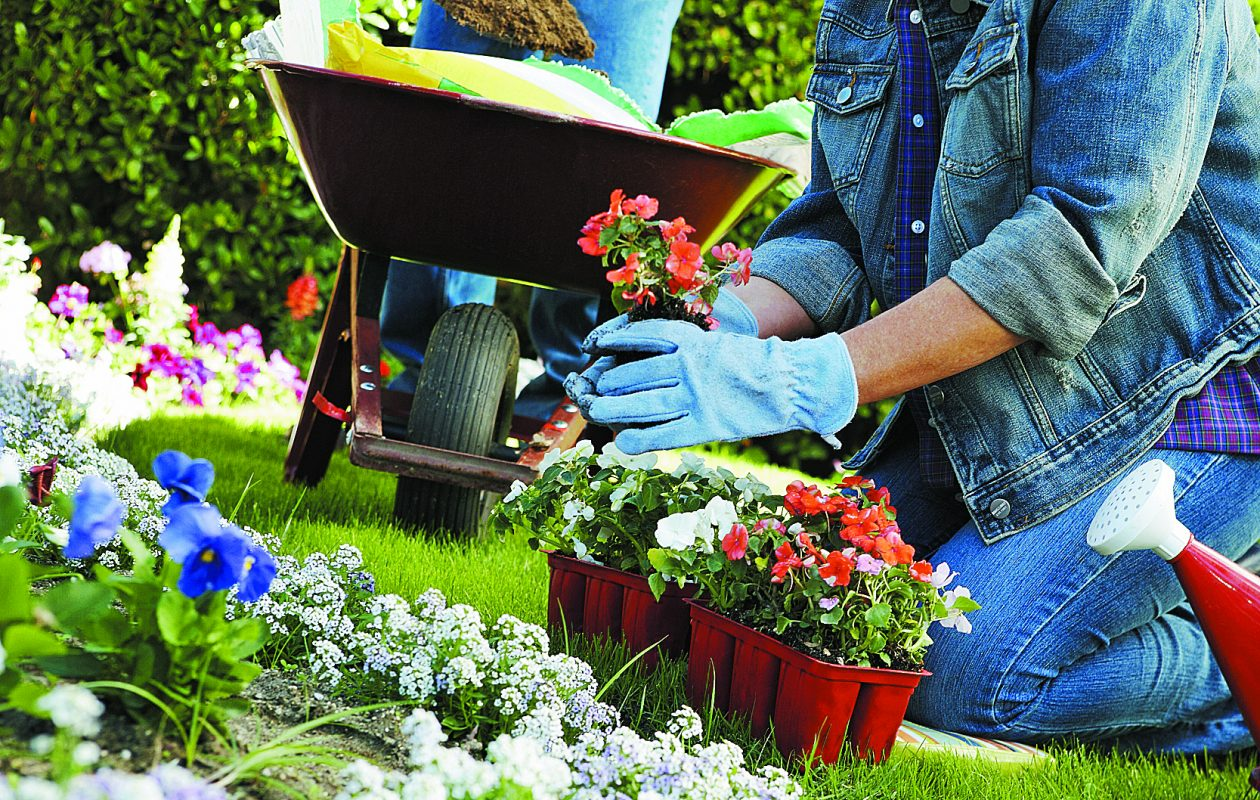 It's just a start but a little gardener analysis goes a long way toward ultimate satisfaction.
