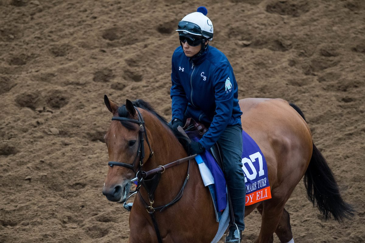 DEL MAR, CA – OCTOBER 30: Lady Eli exercises in preparation for Breeders' Cup Filly & Mare Turf at Del Mar Thoroughbred Club on October 30, 2017 in Del Mar, California. (Photo Credit:  Eclipse Sportswire / Breeders' Cup Photos ©)