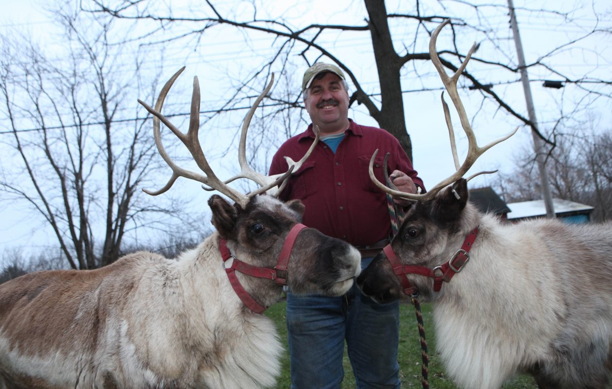 Mike Jablonski, the owner of Antler Ridge Farms, with two of his deer, Noel, left, and Figely. (Sharon Cantillon/News file photo)