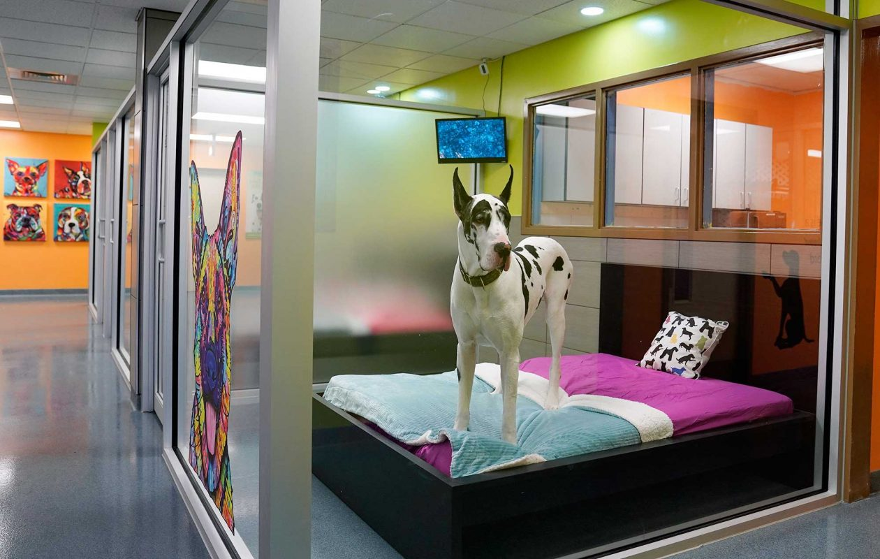 "Kennel? What kennel?  Pet ""resorts"" are today's norm, like the newly opened Creature Comforts in Tonawanda. (Dave Jarosz)"