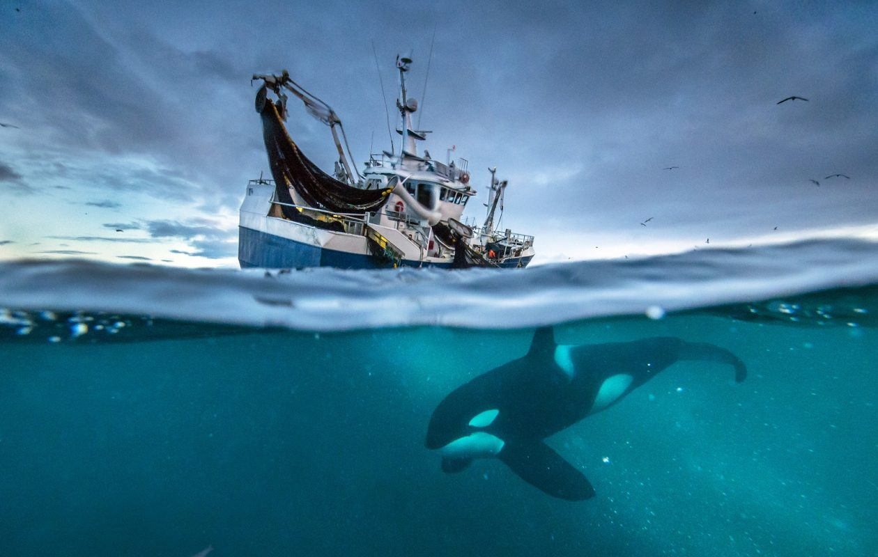 A still from 'Planet Earth: Blue Planet II' taken in Norway. (Audun Rikardsen/BBC America)