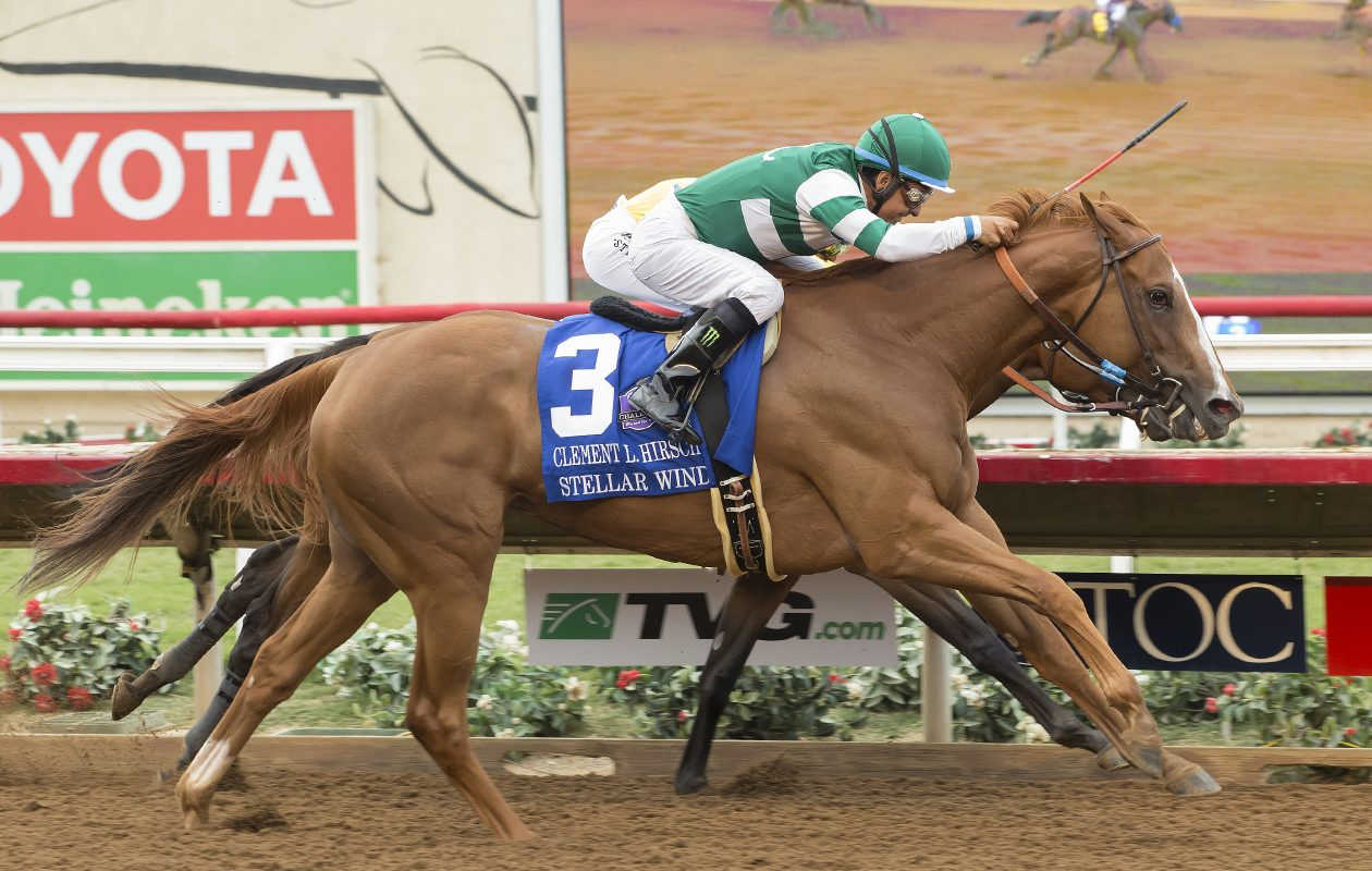 Stellar Wind will be the first female to run in the Pegasus World Cup Invitational. Photo Credit: © BENOIT PHOTO