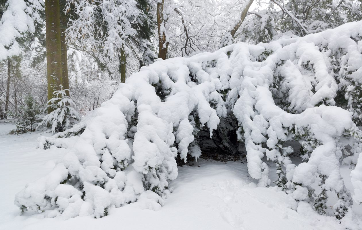 Snow and ice can do a real number on your shrubs and trees.