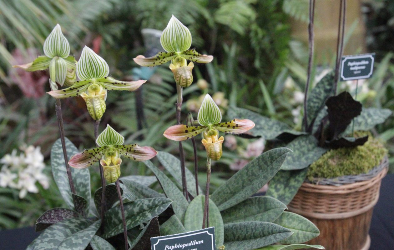 Check out the many varieties at the Orchid Show March 3-4 at the Buffalo and Erie County Botanical Gardens. (James P. McCoy/ News file photo)