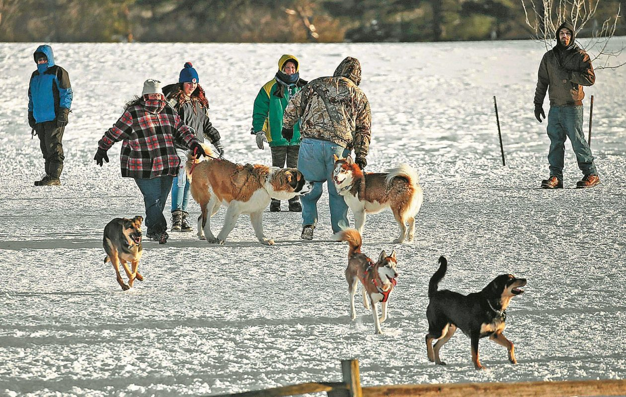 The dog park at Knox Farm State Park in East Aurora remains a popular sport. (Robert Kirkham/Buffalo News)