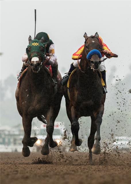 Bolt d'Oro (outside, green blinkers) and McKinzie battle down the stretch in last weekend's San Felipe. Photo Credit: Benoit Photo/Santa Anita Park