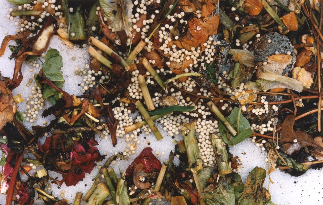 'The Very Rich Hours of a Compost Pile' (1992-93) 'Frozen Peas'