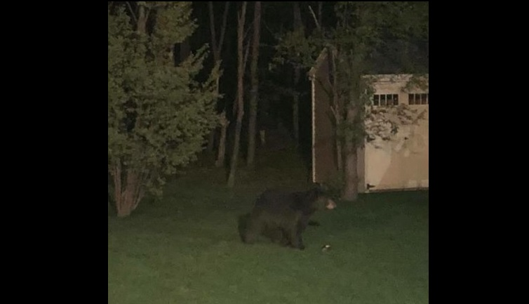 A resident in the Rogers Road area of Hamburg spotted a bear on Thursday night. (Courtesy Hamburg Police)