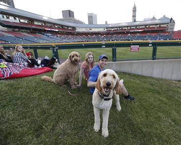 It was Top Dog Day at the Park with a Dog Day parade at Coca-Cola Field during the Bisons game on Thursday, June 14, 2018. It coincided with the Bisons wearing their new Wings jerseys.