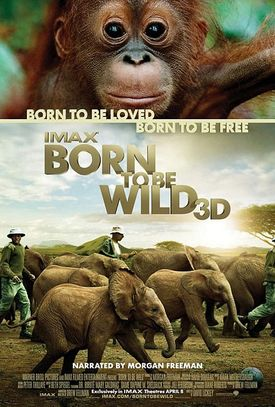 Born_to_be_wild
