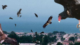 birdemicreview.png