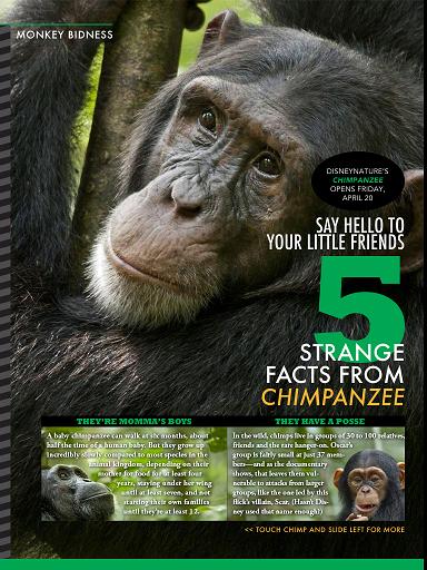 chimpanzeeipad.png