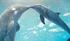 Dolphintale2longrange
