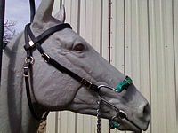 SG Classic Bridle Shown with S Hack & Biothane nose