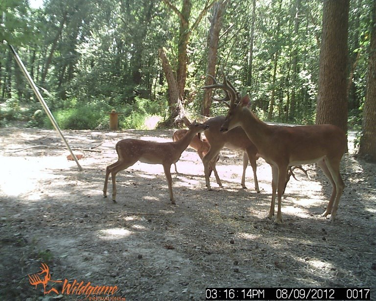 Deer_cam_aug_2012