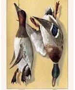 Wild DucksFine art Giclee canvas print 12