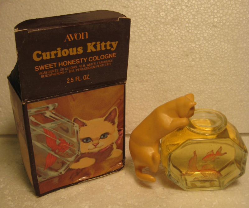 Curious_kitty1_6.99