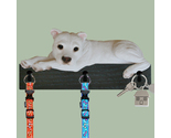 Buy Gifts and Collectibles - Pitbull White Dog Leash and key Holder Gift