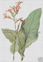021 Bead Pattern Canna Gigantea Flowers Peyote ... - $0.00
