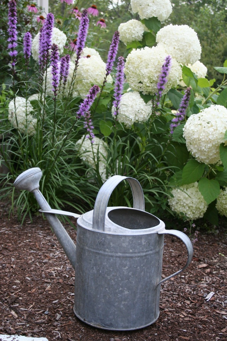"Watering can garden scene with flowers -  5 x 7"" color print"