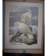 Roger Tory Peterson Snowy Owl Mill Pond Print - $24.99