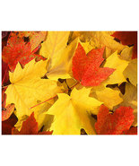 Fall_leaves_thumbtall