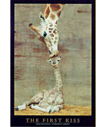 Baby Giraffe First Kiss Poster  - $5.44