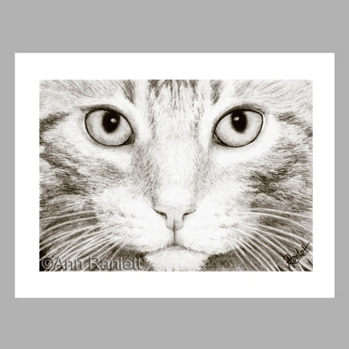 Cat Art , Eye, Face - 5 Note Cards - Ranlett A4C