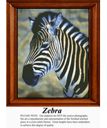 Zebra, Cross Stitch Pattern - $15.00