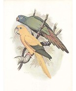 Vintage Golden Conure William T Cooper  Offset ... - $18.95