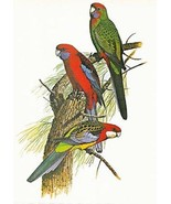 Vintage Crimson Rosella Parrot William T Cooper... - $18.95
