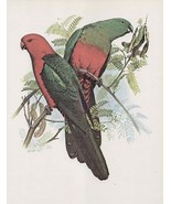Vintage Australian King Parrot  William T Coope... - $21.95