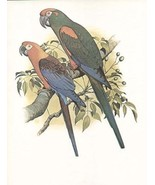 Vintage Extinct Cuban Macaw William T Cooper  O... - $19.95