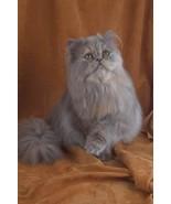 16X20 inch Top 100 Pedigree Cat Canvas Art Pers... - $23.70