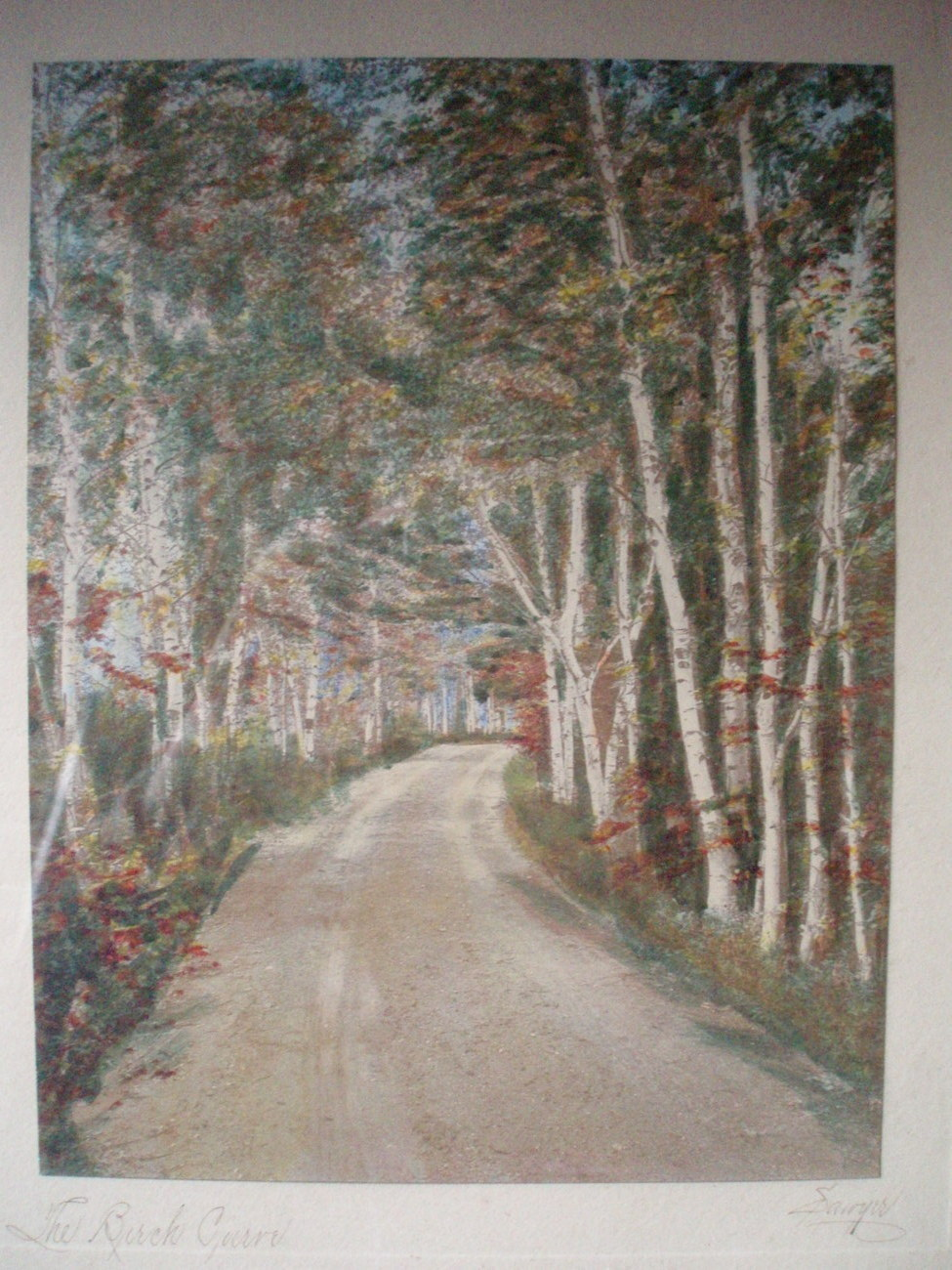 Charles H Sawyer hand painted photo The Birch Curve