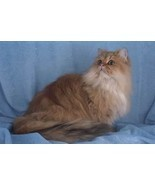 12X16 inches 1 of Top 100 Pedigree Cats Canvas ... - $13.70