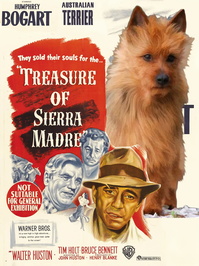 Australian-terrier-the-treasure-of-the-sierra-madre-new