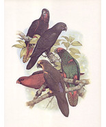 Vintage Black Lory color bookplate William T Co... - $18.95
