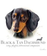 Black and Tan Dachshund  New Profile  Dog  Tshi... - $13.81 - $17.77