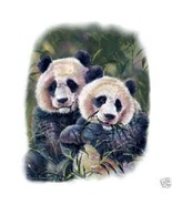 Panda Bears  Panda  Tshirt   Sizes/Colors - $12.82 - $16.78