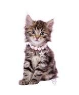 Pink Collar Fluffy Kitten  Cat   Tshirt  Sizes/... - $12.82 - $16.58
