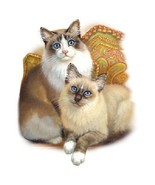 2 Fluffy Cats     Cat  Tshirt    Sizes/Colors - $12.82 - $16.78