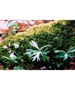 Forest_floor_hr1_4x6_watermark_frfl94_thumbtall
