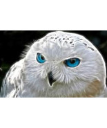 MAGICK OWL SPIRIT Spell bring me the power, the... - $780.00