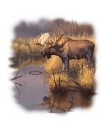 Bull Moose Hooded Sweatshirt   Sizes/Colors   - $24.70 - $32.62